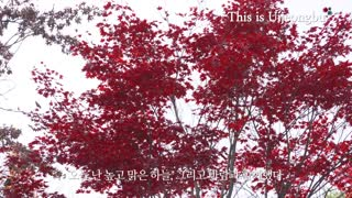 Letting the Autumn leave (feat.의정부의 가을 일기)